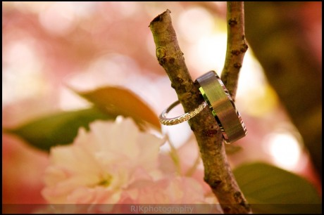 shot of rings in the blooming tree